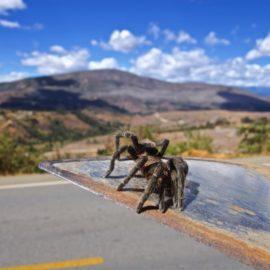Permeating Peru! Border Crossing to Cajamarca